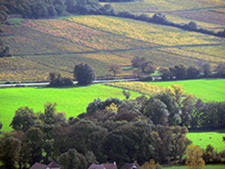 Valley des Vaux : mixed vineyard and grassland